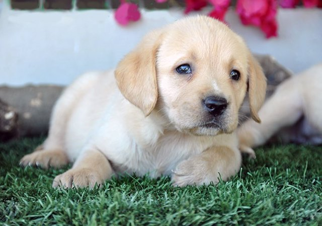 Castellón incorporará un segundo perro policía