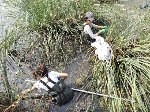 Ecologistas retiran basura en el Guadalquivir