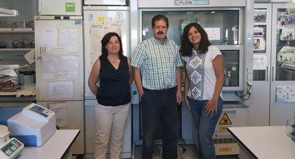 La adaptación inmunológica en el embarazo previene transmisión del mal de Chagas