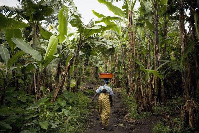 Mujer campesina Congo