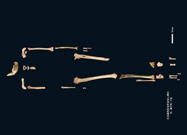 Esqueleto del hombre de Tianyuan