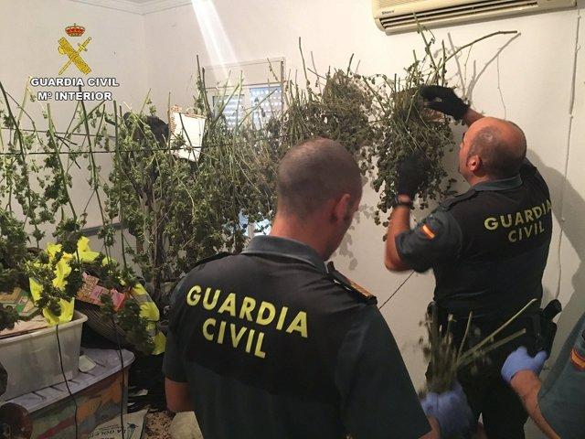 Una de las operaciones de la Guardia Civil contra el tráfico de drogas