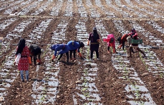 Refugiados sirios en Al Jiam (Líbano)