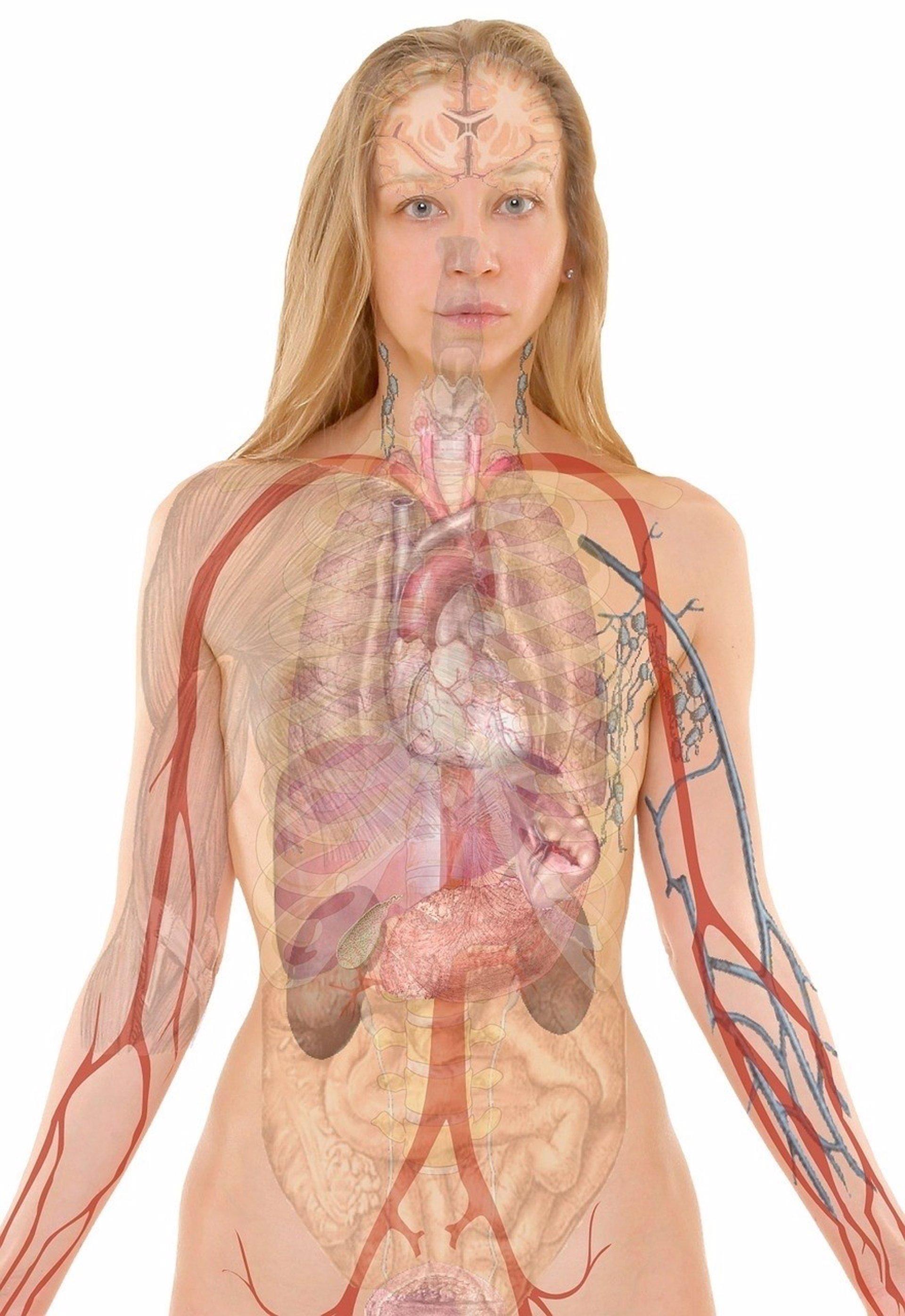Hay 7 órganos que no necesitamos para vivir ¿sabes cuáles son?