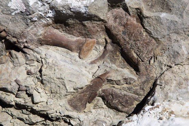 Un esqueleto casi completo de tiranosaurio aparece en Utah
