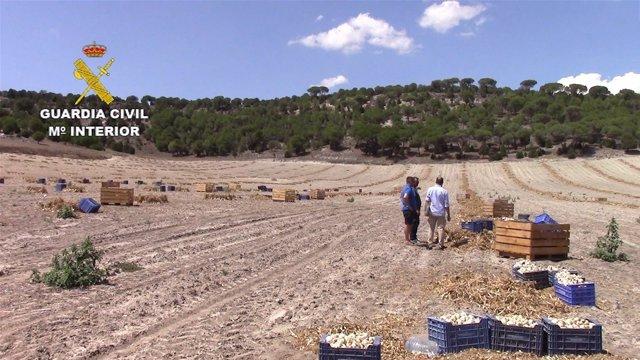 Segovia.- Explotación agraria donde se ha reliazado la detención