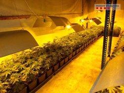 Desmantellada una plantació de marihuana amb més de 1.100 plantes en una nau industrial de Santa Oliva, al Baix Penedès (ACN)