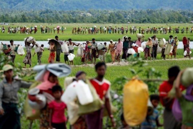 Refugiados rohingya campos de arroz