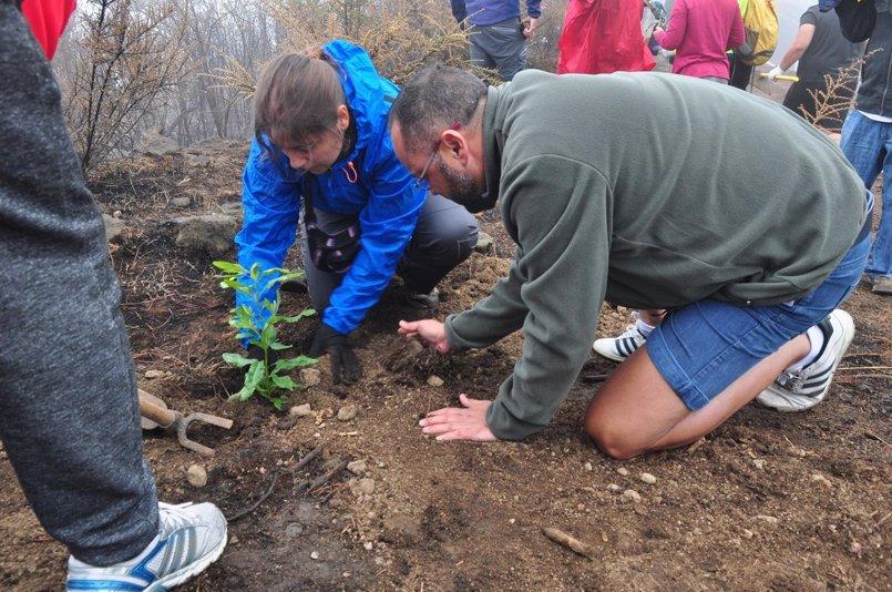 Un grupo de jóvenes planta cien árboles en las zonas afectadas por el incendio de Tejeda