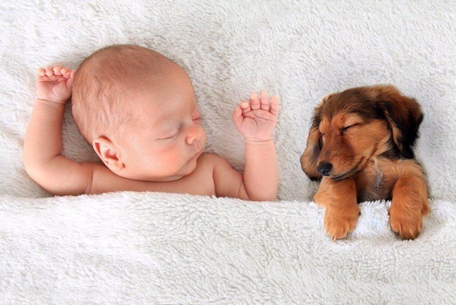 Foto: ¿Qué similitudes hay entre el 'cachorro' humano y el de cualquier otro mamífero? (GETTY IMAGES/ISTOCKPHOTO / BARBARA HELGASON)