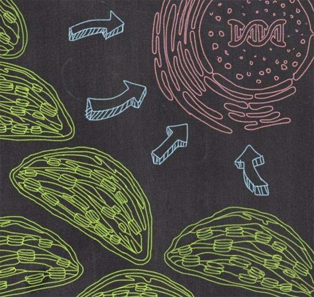 La señal de los cloroplastos, con proteínas mal pegadas
