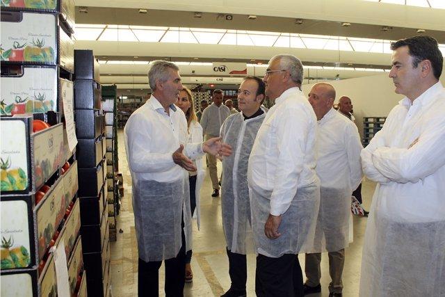 Np: Arellano Destaca Las Exportaciones Hortofrutícolas De Casi, Que Ha Contribui