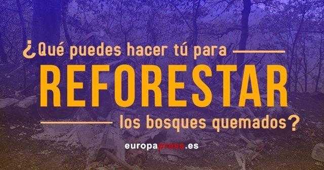 Reforestar los bosques quemados