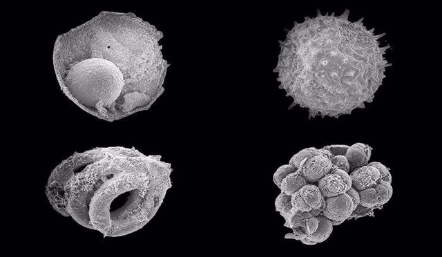 Microfósiles de la formación Khesen