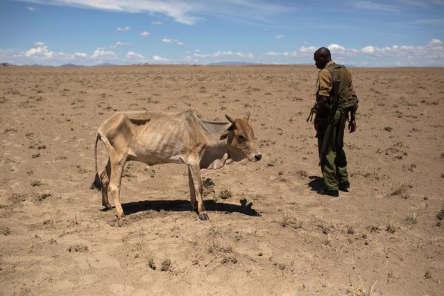 Sequía en Kenia