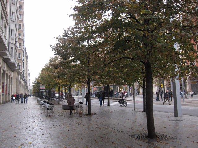 Niebla, otoño, árboles