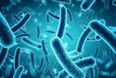 """Foto: Descubren el """"sentido del tacto"""" de las bacterias"""
