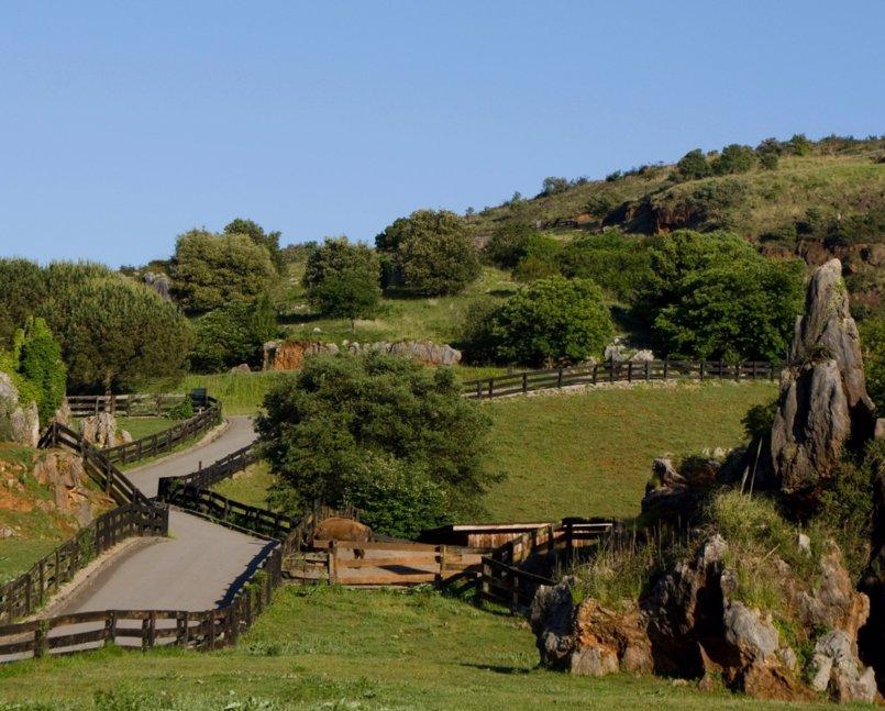 Cantur licita la primera fase del cierre perimetral del Parque de Cabárceno
