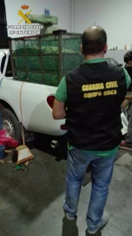 Siete investigados por hurtar aceitunas en Arahal (Sevilla)