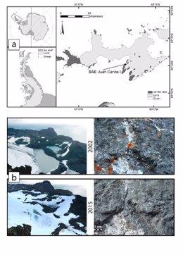 Los líquenes sufren una regresión en la Península Antártica