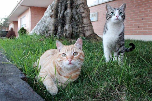 Dos de los gatos de la colonia