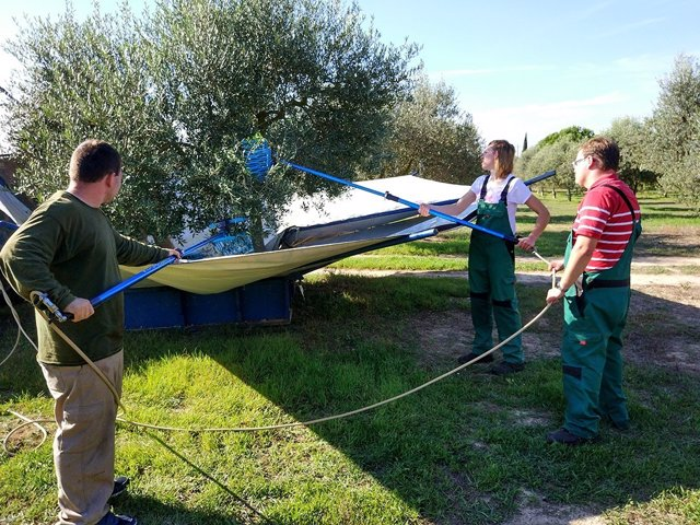 Un grupo de personas con discapacidad colaboran en la elaboración de aceite de oliva de Es Convent