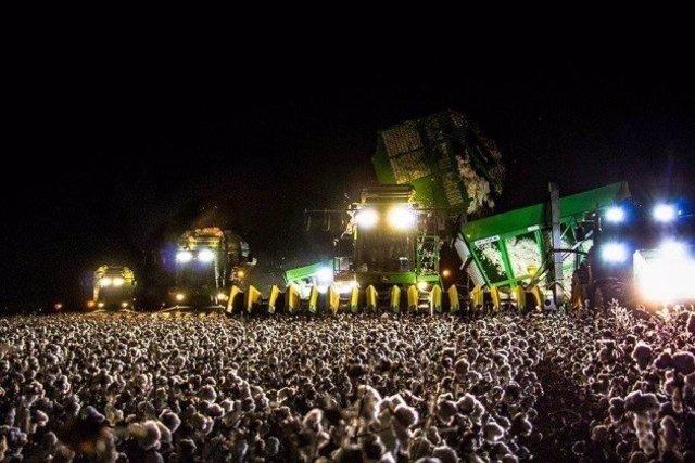 Cosechadora de algodón trabajando por al noche