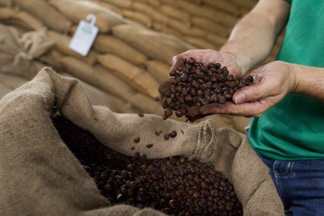 Brasil exporta 2,65 mi sacas de café verde em maio, alta de 16,6%