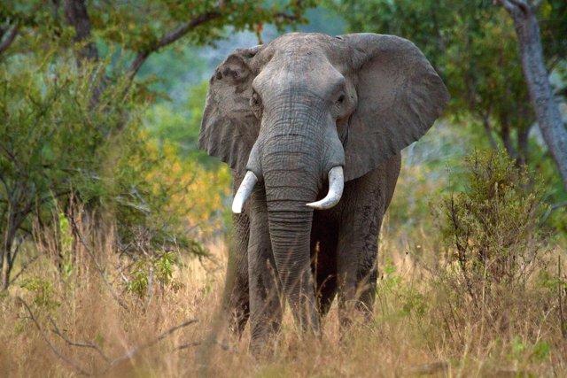 Elefante en la reserva de Selous, en Tanzania, en peligro por la caza furtiva