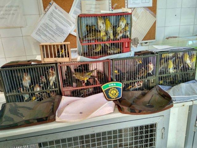 Aves decomisadas