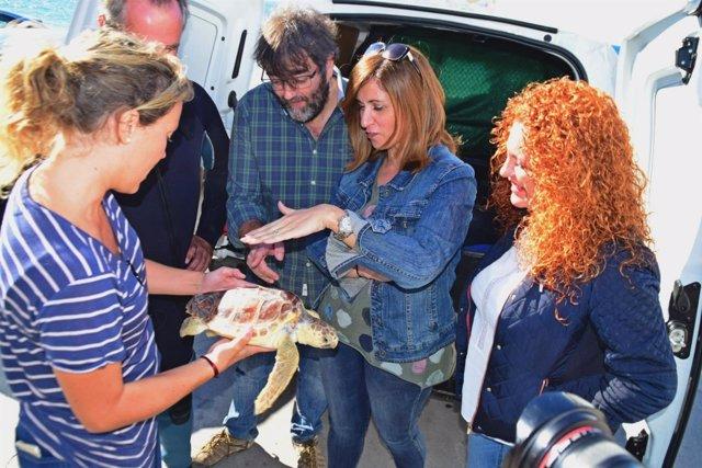 Liberación de un ejemplar de tortuga boba a su medio natural