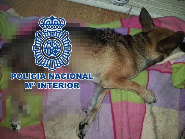 """Nota De Prensa """"La Policía Nacional Detiene A Un Hombre Por Maltrato Animal, Uno"""