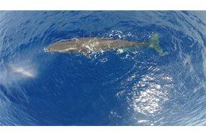 ¿Conoces la relación entre la novela Moby-Dick y un asombroso naufragio ocurrido en el Océano Pacífico?