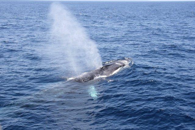 El corredor de migración de cetáceos del Mediterráneo se declarará Área Marina Protegida