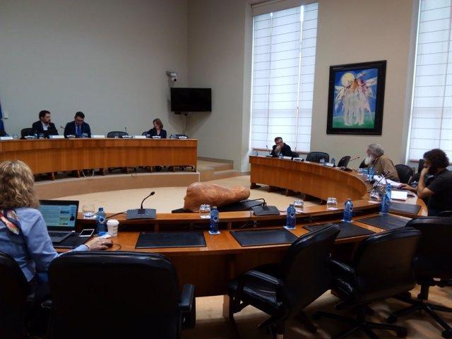 Carmen Bouso en comisión parlamentaria