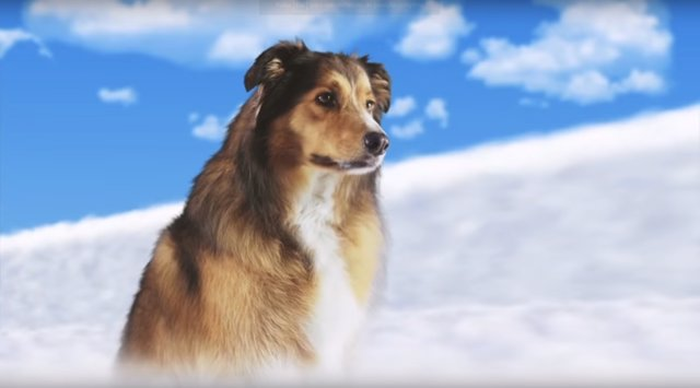 El perro protagonista va al cielo tras ser atropellado