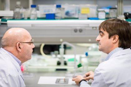 Bioingenieros proyectan un dispositivo pionero para combatir la distrofia muscular