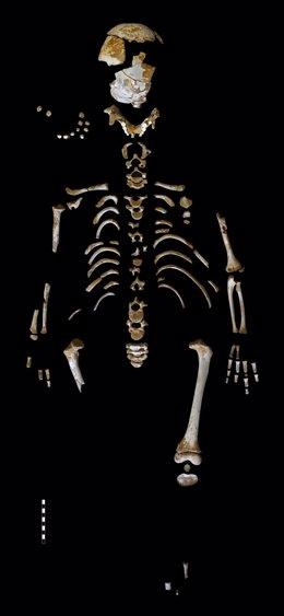 Esqueleto de niño neandertal de 7 años, encontrado en El Sidrón (Asturias)