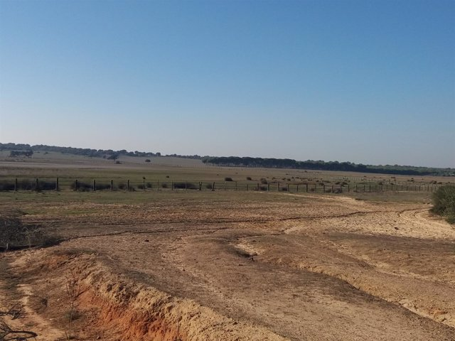 Reserva natural de la Dehesa de Abajo, cerca de Doñana, en sequía