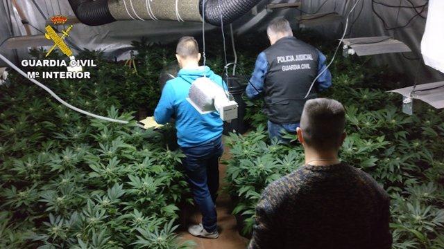 Droga intervenida en marihuana