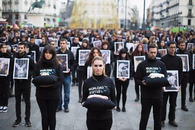 Igualdad Animal exhibe animales muertos en la Puerta del Sol
