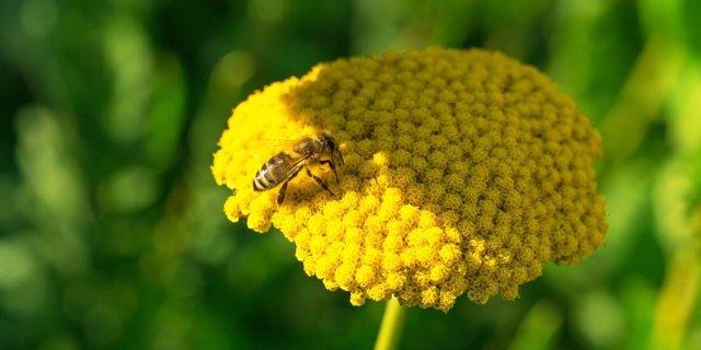 La Comisión para salvar a las abejas pide la prohibición total de neonicotinoide
