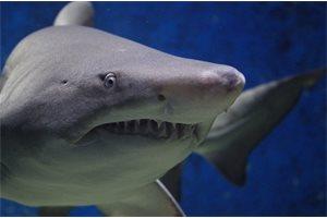 ¿Cómo sobrevivir al ataque de un tiburón? Una ejecutiva de Wall Street muere desangrada en Costa Rica mientras buceaba