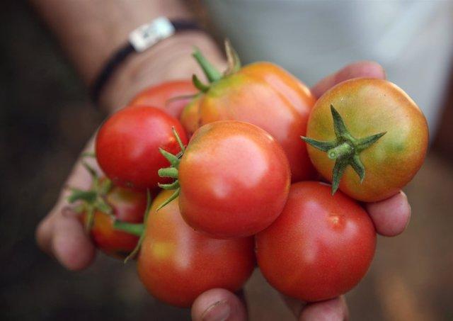 Pan de payés y tomates de 'ramellet', los productos baleares más consumidos por familias mallorquinas con hijos
