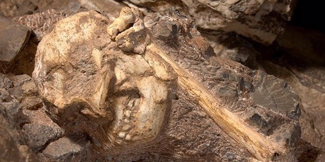 Cráneo de Liitle Foot