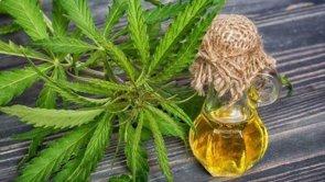 El Congreso de Paraguay aprueba el uso de la marihuana con fines medicinales (TWITTER)