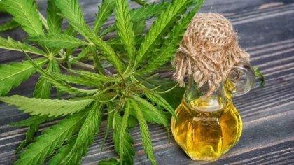 El Congreso de Paraguay aprueba el uso de la marihuana con fines medicinales
