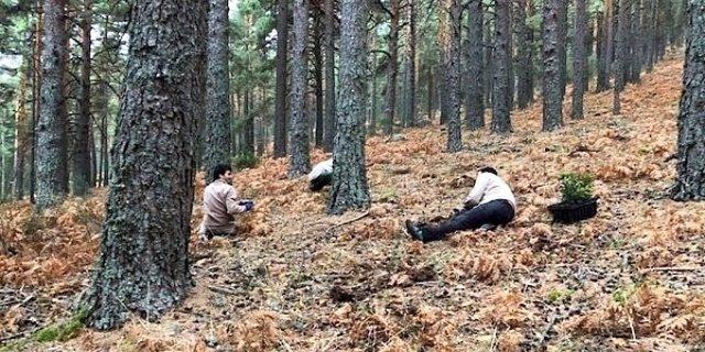 Reforestación de la Cuenta Alta del Manzanares