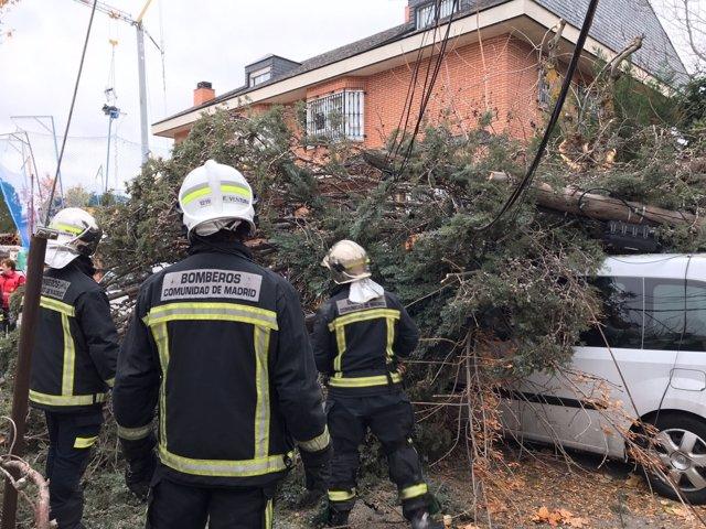 Cae un árbol sobre una furgoneta en Pozuelo