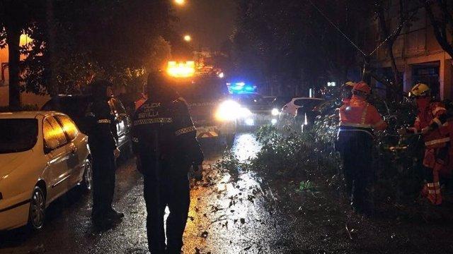 Ramas caídas por el temporal en plena vía en Sevilla capital